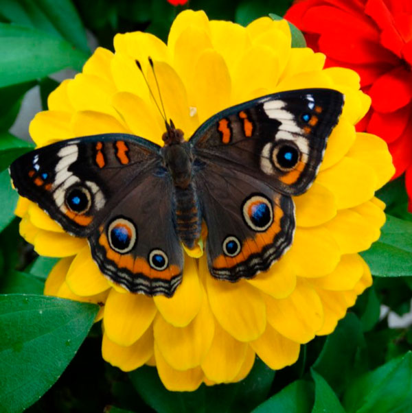 Yellow flower, black butterfly